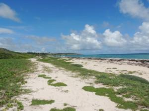 Long Beach Barbados