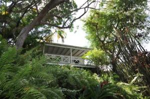 Tamarind Cottage nestled among the trees