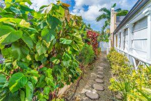 porters-court-3-barbados-pathway